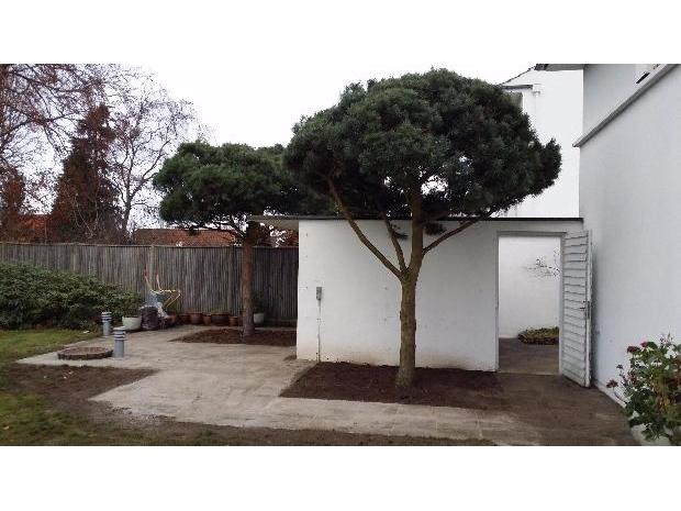 Plantning af store træer